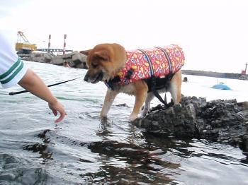 gon 海に入る