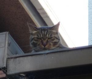 猫は何でも知ってるのよ!