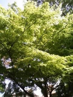みずみずしい新緑ですよ~♪