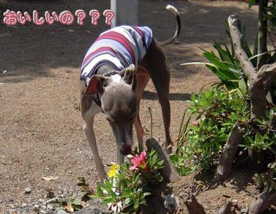 これ・・・。さっきはなが食べてたお花だ~。