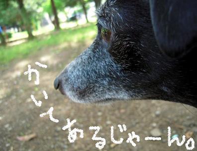ちゃんとよみナサーイ☆