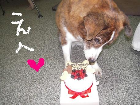 あーちゃんお誕生日おめでとうってかいてあるんだよ~♪♪♪