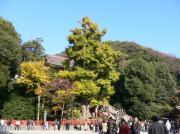 20061202kamakura2
