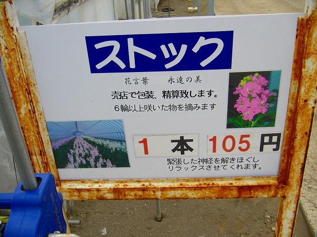 P1020505-5.jpg