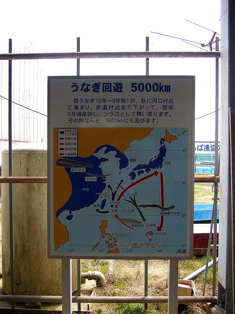 P1050147-15.jpg