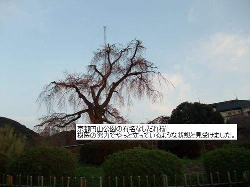 24.4高槻観桜会 011