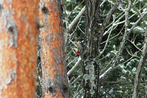冬の野鳥 087