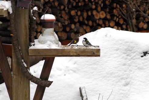冬の野鳥 090