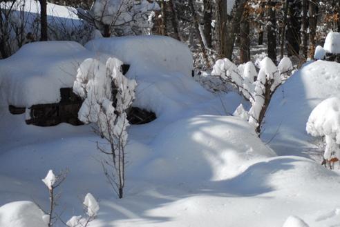 雪の日 001