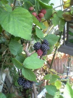 bberry3.jpg