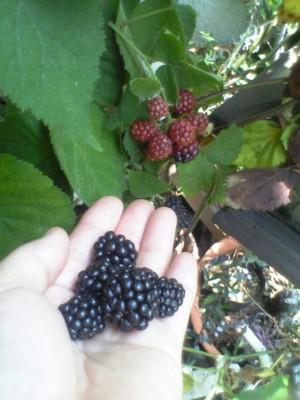 bberry4.jpg