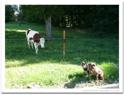 グミ君の森に牛が入った