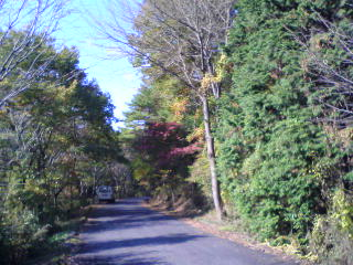 色づく山道