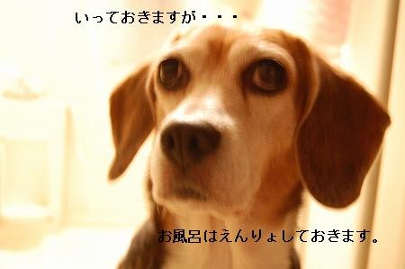 DSC_1574.jpg