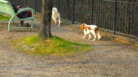 ベルシー公園 3月30日