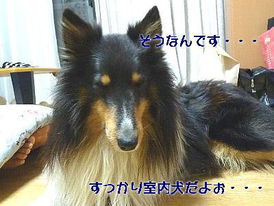 110411_01.jpg