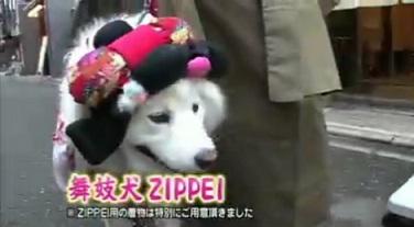 maikoZIPPEI.jpg