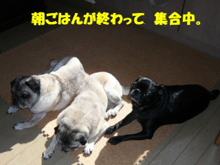 2008_0728beer0001t.jpg