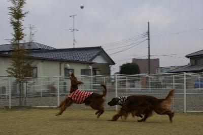 20081103ichi5