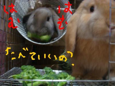 食べてもいいですか?