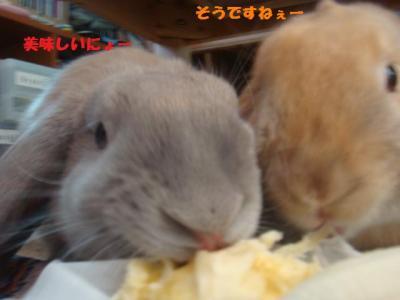 バナナは美味しい・・・