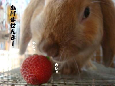 ばっるご、初めてイチゴを食べる・・・