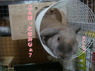 ウサギのベネ