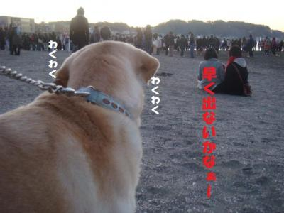 犬のハルナも・・・