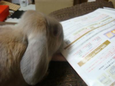 ウサギもチラシを見ます・・・?