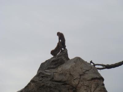 山上で盛る・・・
