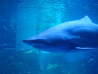 サメ・・・