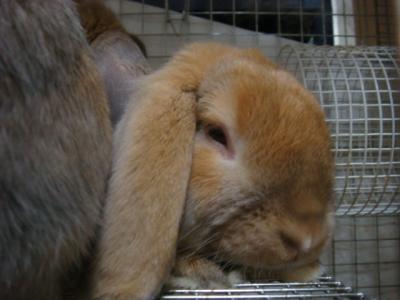 眠いんですけど・・・
