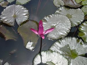 99_4_flower.jpg