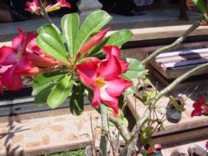 99_5_flower.jpg