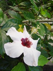 99_6_flower.jpg