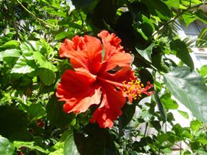 99_7_flower.jpg