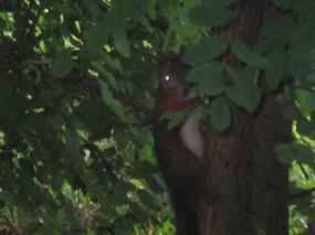 木に登っちゃった