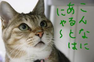 フリー素材屋Hoshino3
