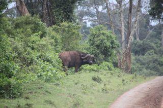 201108kenya - 201110010013