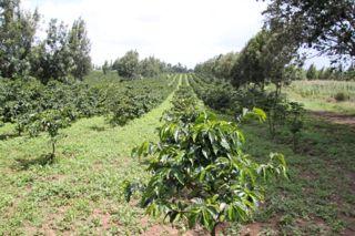 201108kenya - 201110130011