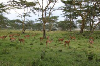 201108kenya -  201110140013