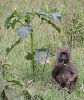 201108kenya - 201110150014