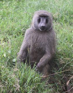 201108kenya - 201110150011