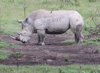 201108kenya - 201110160014