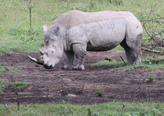 201108kenya - 201110160015