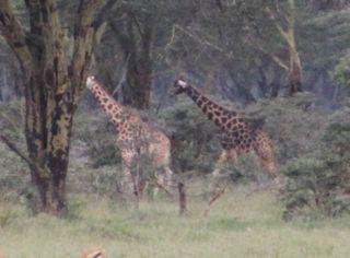201108kenya - 20111021013
