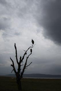 201108kenya - 20111021014