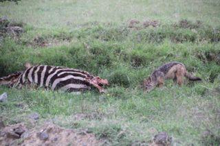 201108kenya - 20111022011