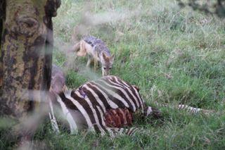 201108kenya - 20111022048