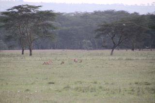 201108kenya - 20111024015